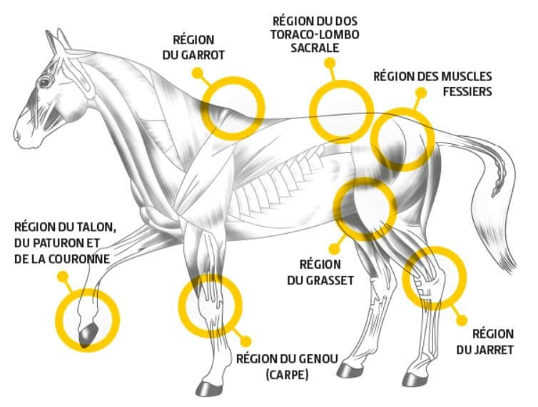 avantages mobility guidolin horses